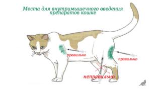 Как сделать укол кошке 3