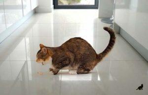 Лечение отравления у кошки 1