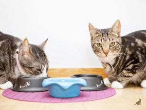 Лечение отравления у кошки 2