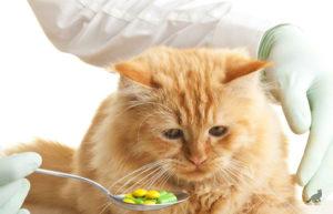 Лечение отравления у кошки 5