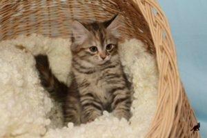 Воспитание котенка 3