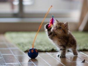 Дрессировка котов 2