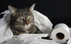 Почему кот начал гадить не в лоток 2