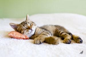 Кошка спит 1
