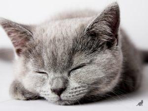 Кошка спит 2