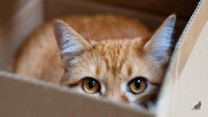 Кошка в коробке 1