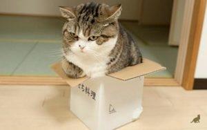 Кошка в коробке 2