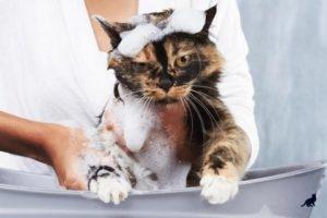Кошка боится воду 1