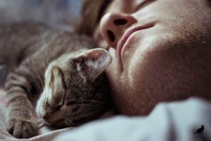 Кошка спит на человеке 3