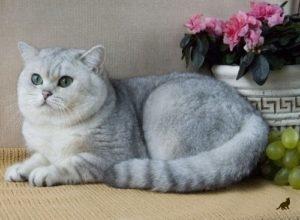 Появление кошки в доме 1