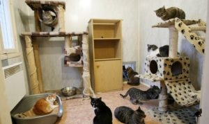 Появление кошки в доме 2