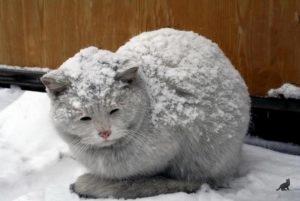 Появление кошки в доме 3