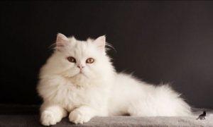 Приметы про кошек 2