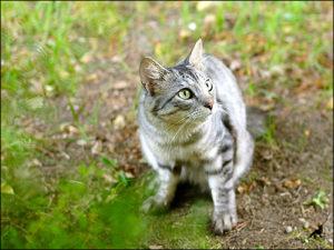 Приметы про кошек 3