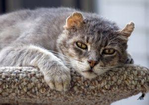 Приметы про кошек 4