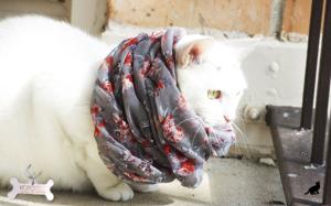 Простуда у кошек 1