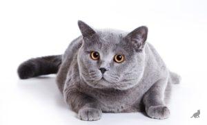 Серые кошки 2