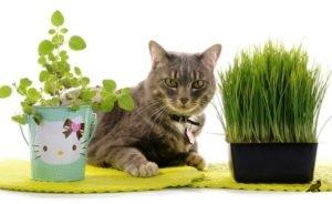 Трава для кошек 2
