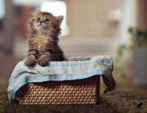 Уход за котятами 2