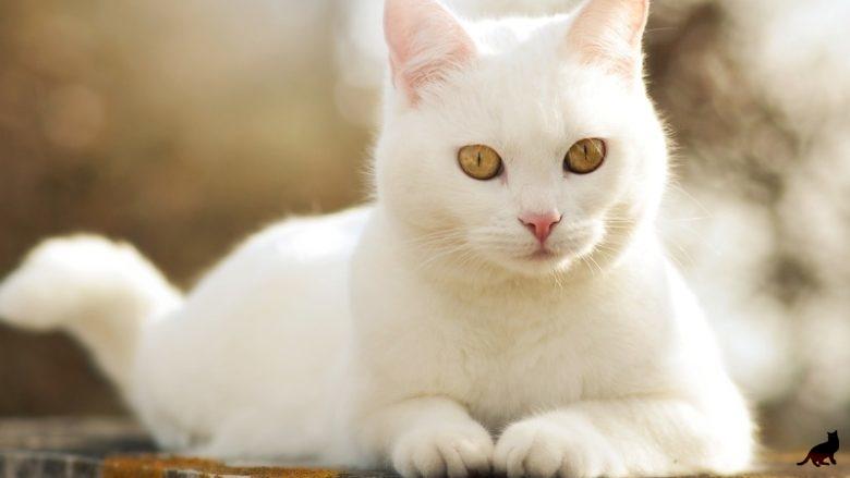 Породы животных с белой шерсткой