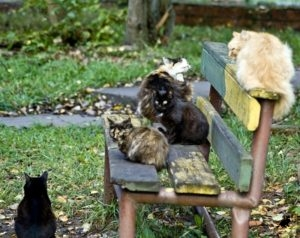 Бездомные коты во дворе