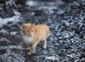Пропавшая кошка