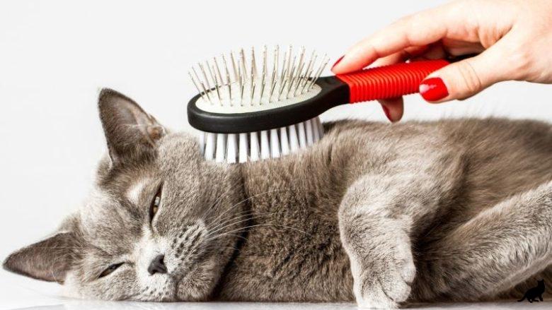 Как правильно вычесывать кошку
