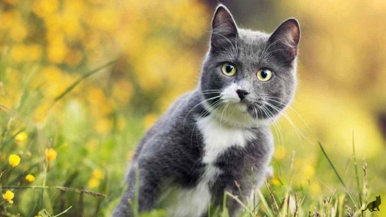 Сколько дней гуляет кошка