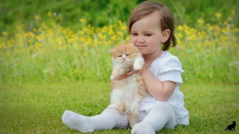 Какую кошку лучше завести для ребенка