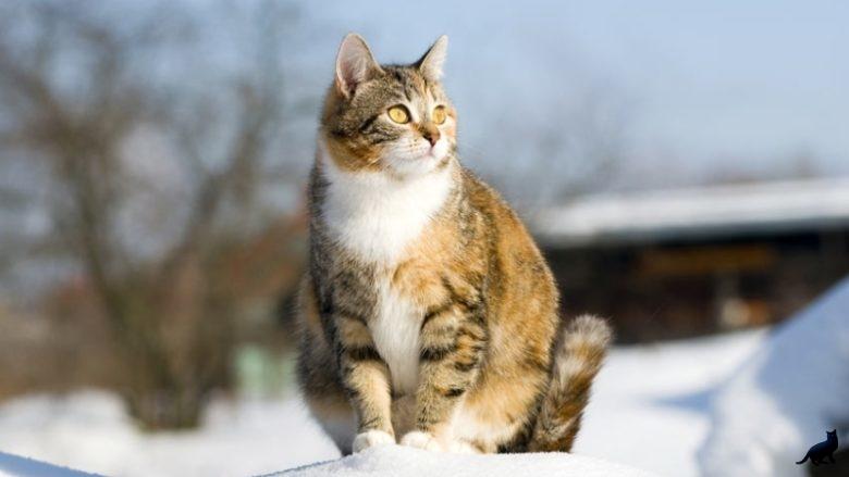 Как кошка ведет себя перед родами