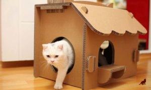 Домик-укрытие для беременной кошки