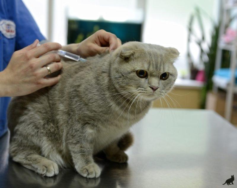 Что будет если не лечить диабет у кота