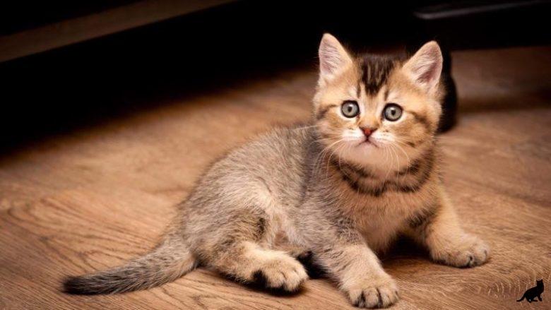 Что необходимо котенку в первый день пребывания в новом доме