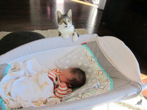 Знакомство кошки и новорожденного ребенка