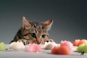 Диета для кошек при панкреатите