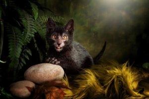 Порода кошек ликои характер